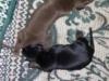 les bébés de madgyce et helmut
